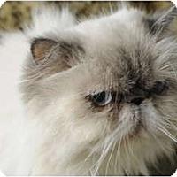 Adopt A Pet :: Isabella 2 - Columbus, OH