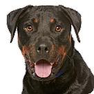 Adopt A Pet :: Bronx