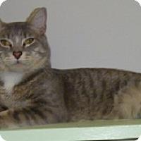 Adopt A Pet :: Stavros - Hamburg, NY