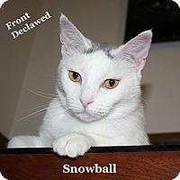 Adopt A Pet :: Snowball - Bentonville, AR