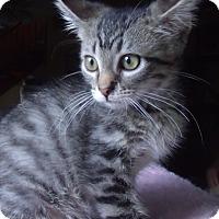 Adopt A Pet :: BAKER - Acme, PA