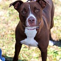 Adopt A Pet :: Willow - Mount Laurel, NJ