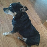 Adopt A Pet :: Chomper - Topeka, KS