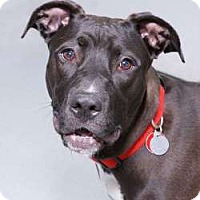 Adopt A Pet :: Maisy - Sudbury, MA