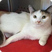 Adopt A Pet :: Cheri - Hurst, TX