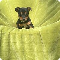 Adopt A Pet :: Jagger - Groton, MA