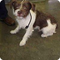 Adopt A Pet :: TJ - Encino, CA