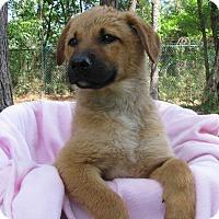 Adopt A Pet :: Lisa - Charlemont, MA