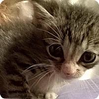 Adopt A Pet :: Finn - Island Park, NY