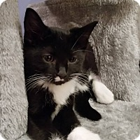 Adopt A Pet :: Fawn - Elyria, OH