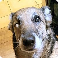Adopt A Pet :: Seven - Surrey, BC
