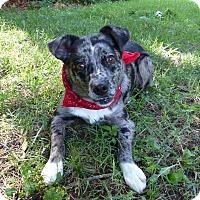Adopt A Pet :: Reagan - Mocksville, NC