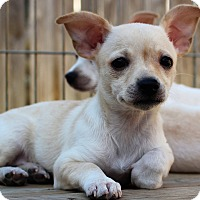 Adopt A Pet :: Vega - Bristol, CT