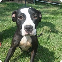 Adopt A Pet :: Faith - Camilla, GA