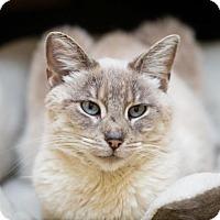 Adopt A Pet :: Elissa - Fargo, ND