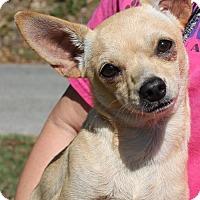 Adopt A Pet :: Mickey 25704 - Prattville, AL