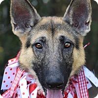 Adopt A Pet :: Jessica - Denver, CO