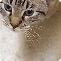 Adopt A Pet :: C.J. - Huntsville, AL
