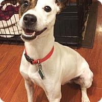Adopt A Pet :: Frank - Clarkston, MI