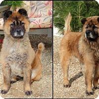 Adopt A Pet :: Burt - Valley Center, CA