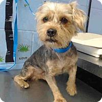 Adopt A Pet :: URGENT on 12/15 SAN BERNARDINO - San Bernardino, CA