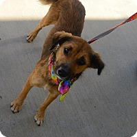 Adopt A Pet :: Ginger - Muldrow, OK