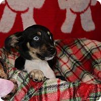 Adopt A Pet :: Charles - Waldorf, MD