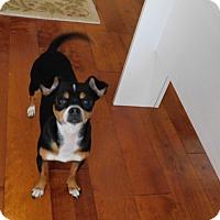 Adopt A Pet :: Gabby - West Deptford, NJ