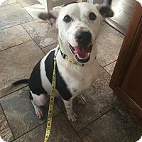 Adopt A Pet :: Cash - Sagaponack, NY