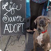 Adopt A Pet :: Hank - Effort, PA