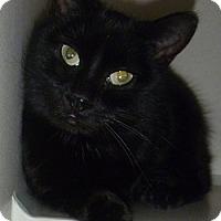 Adopt A Pet :: Denise - Hamburg, NY