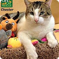 Adopt A Pet :: Chester - Oakville, ON