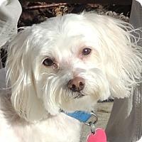 Adopt A Pet :: Gino and Freckles - Washington, DC