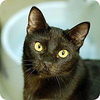 Adopt A Pet :: Licorice - Winchester, CA