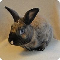 Adopt A Pet :: Cinnabun - Los Angeles, CA