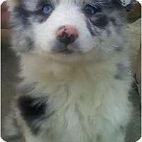 Adopt A Pet :: Ava - Providence, RI