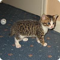 Adopt A Pet :: TIMMY - Hamilton, NJ