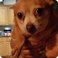 Adopt A Pet :: Chelsie - Crump, TN