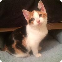 Adopt A Pet :: Koi - Long Beach, NY