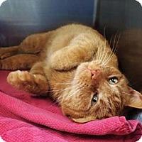 Adopt A Pet :: Parker - Merrifield, VA