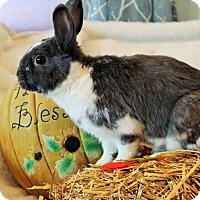 Adopt A Pet :: S'mores - Hillside, NJ