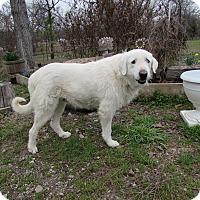 Adopt A Pet :: McKinnet - Kyle, TX