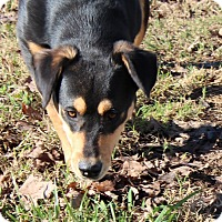 Adopt A Pet :: Galloot - Harmony, Glocester, RI