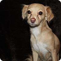 Adopt A Pet :: Ariel - Henderson, NV