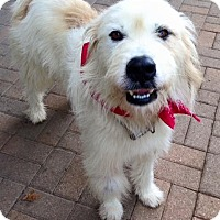 Adopt A Pet :: Montrose - MEET HIM - Woonsocket, RI