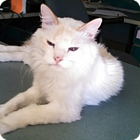Adopt A Pet :: Blue-Foster 16 yr - Scottsdale, AZ