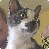 Adopt A Pet :: Pablo - Devon, PA