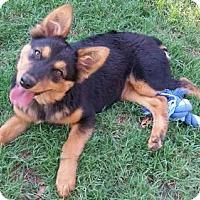Adopt A Pet :: Kaila - San Diego, CA