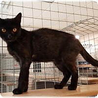Adopt A Pet :: Raven - Welland, ON