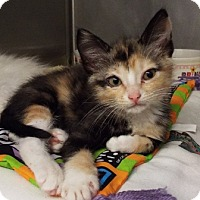 Adopt A Pet :: Shirley - Grants Pass, OR